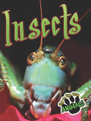 Insects Insects  by  Don McCleese