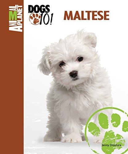 Maltese (Animal Planet Dogs 101) Jenny Drastura