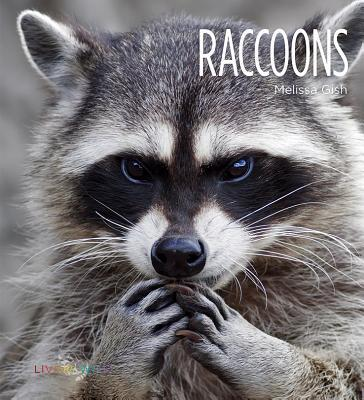 Raccoons  by  Melissa Gish