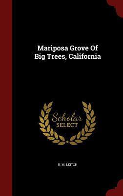 Mariposa Grove of Big Trees, California B.M. Leitch