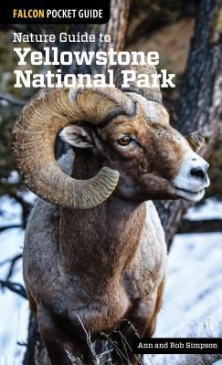 Nature Guide to Yellowstone National Park Ann Simpson