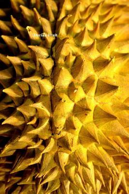 Durian Fruit: (Website Password Organizer ) Never Worry about Forgetting Your Website Password or Login Again!  by  Unique Journal