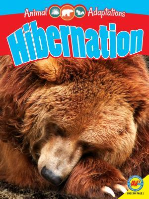 Hibernation  by  Pamela McDowell