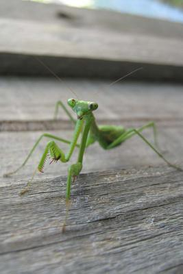 Mind Blowing Green Praying Mantis Journal: 150 Page Lined Journal  by  Mindblowing Journals