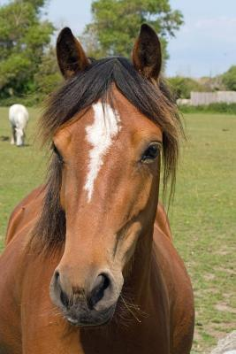 Horse Portrait (200 Page Lined Journal): Blank 200 Page Lined Journal for Your Thoughts, Ideas, and Inspiration  by  Unique Journal