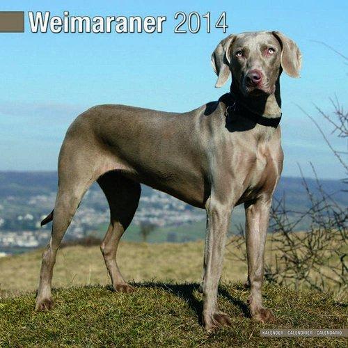 Weimaraner 2014 (Calendar 2014) Avonside Publishing