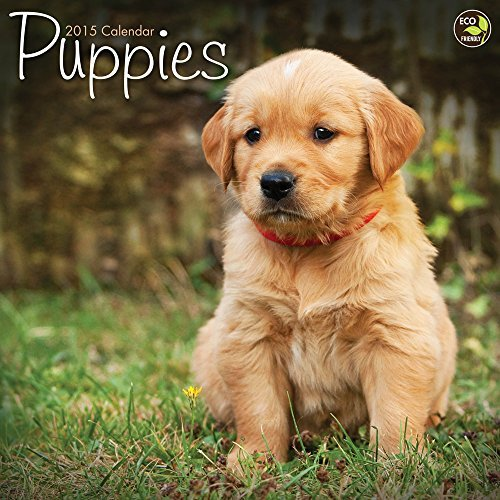 2015 Puppies Wall Calendar TF Publishing