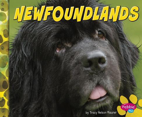 Newfoundlands Blake Hoena