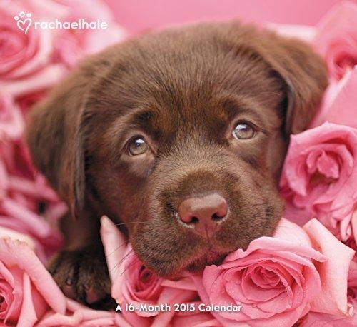 Rachael Hale Dogs Wall Calendar (2015) Day Dream