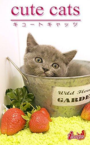 cute cats12 British Shorthair  by  kabusikigaisyailogos
