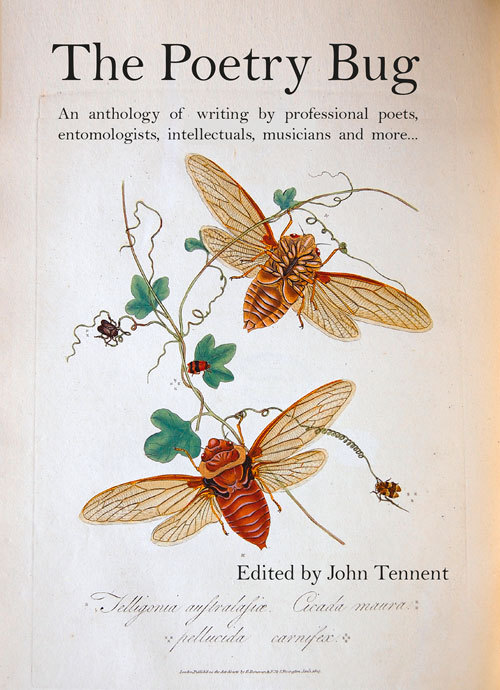 The Poetry Bug John Tennent