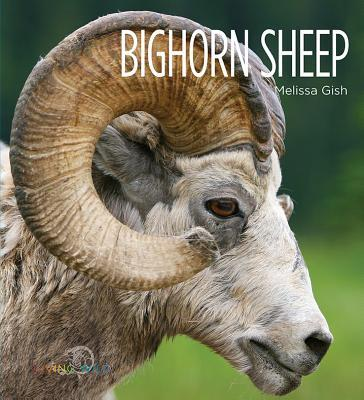 Bighorn Sheep: Living Wild  by  Melissa Gish