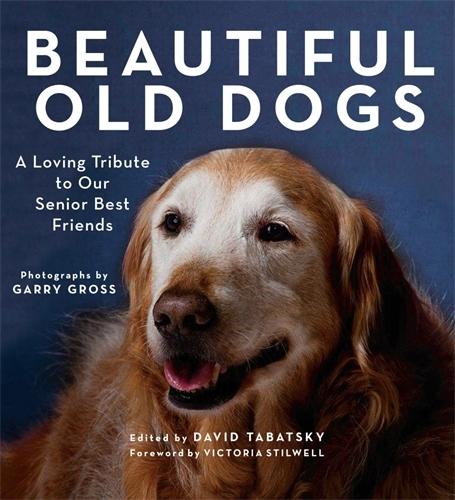 Beautiful Old Dogs  by  David Tabatsky