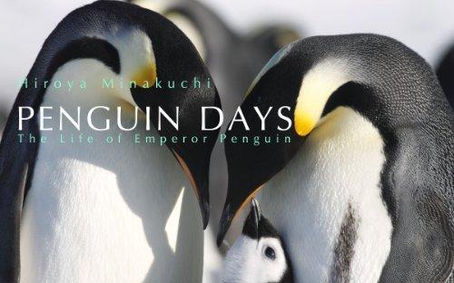 Penguin Days--The Life of Emperor Penguin  by  Hiroya Minakuchi