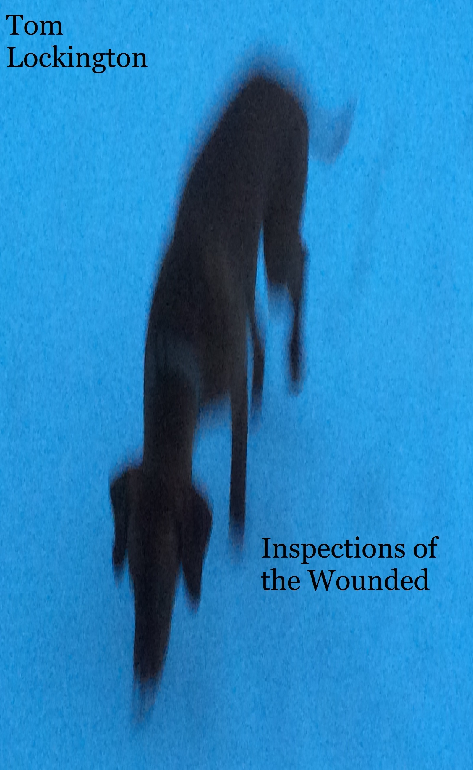 Inspections of the Wounded Tom Lockington
