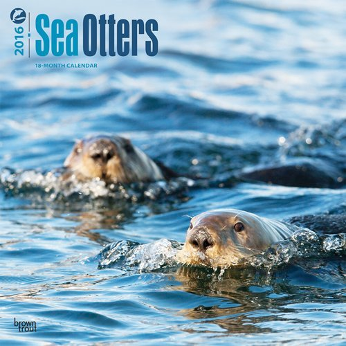 Sea Otters 2016 Square 12x12 Browntrout Publishers