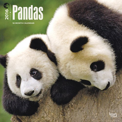 Pandas 2016 Square 12x12  by  Browntrout Publishers