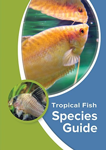Tropical Fish Species Guide Kevin Wilson