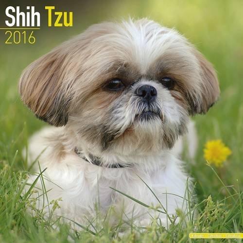 Shih Tzu Calendar - Only Dog Breed Shih Tzu Calendar - 2016 Wall calendars - Dog Calendars - Monthly Wall Calendar Avonside by MegaCalendars