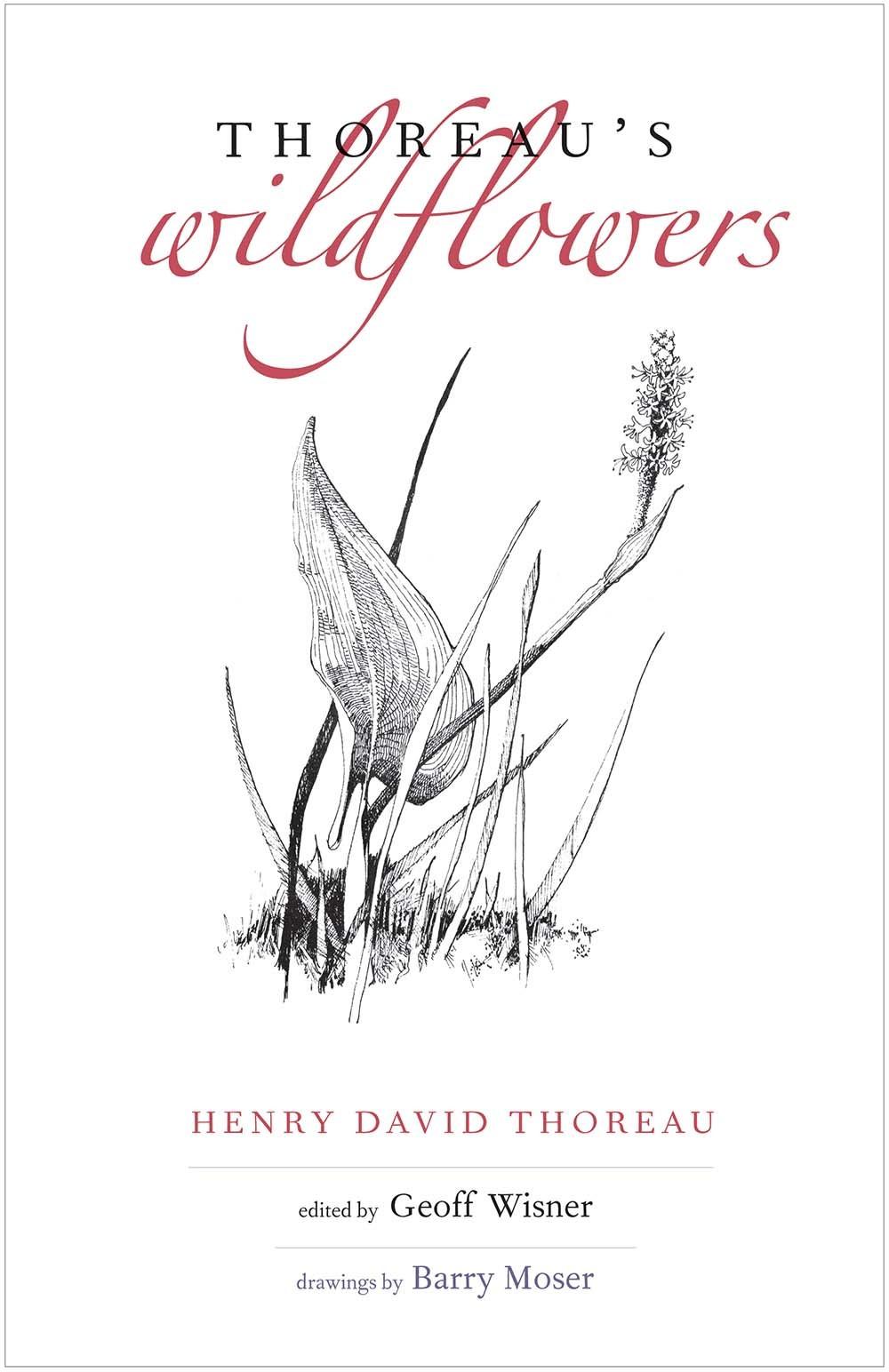 Thoreaus Wildflowers Henry David Thoreau