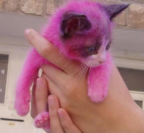 petting cat photo: cat 94californiacat.jpg