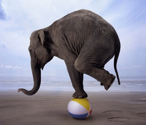 photo ElephantBalancing_zpsda454c56.jpg