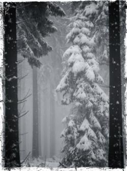 photo winteruse7_zpsrxmfpfte.jpg
