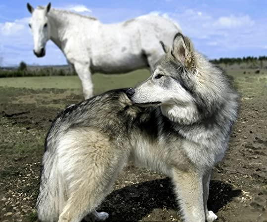 horse and wolf copy